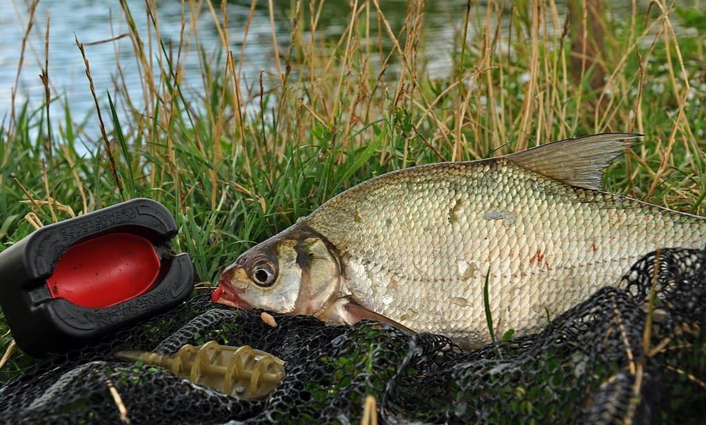 Рыбалка на фидер весной